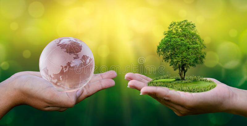 Protecting Our Natural World From Across The Globe